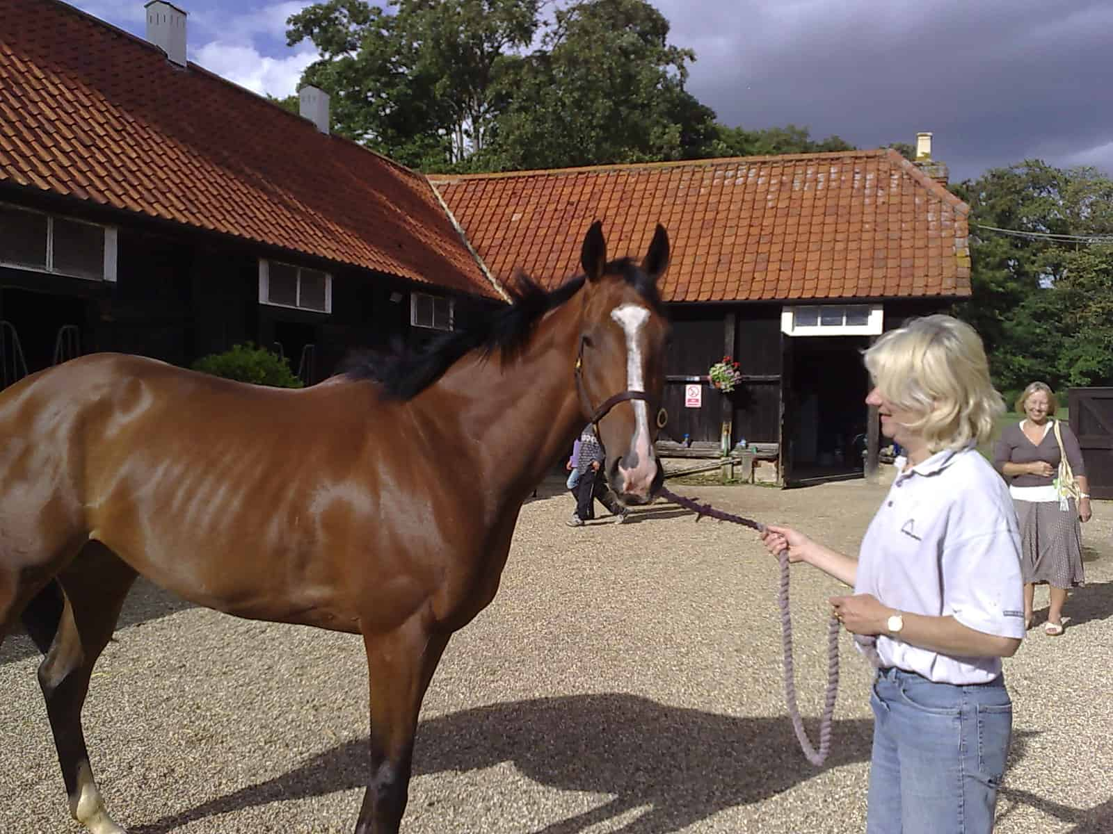 Julia Feilden and Obvious, Geegeez.co.uk's new Club Horse