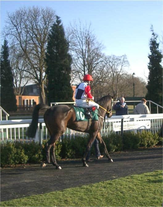 Always De One, Geegeez Racing Club Horse