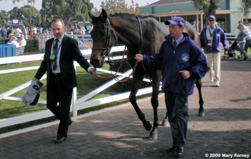 Goldikova wins Breeders Cup Mile 2010