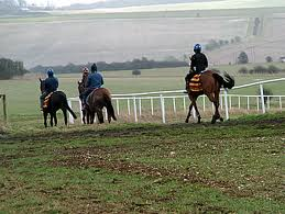 Training Gallops