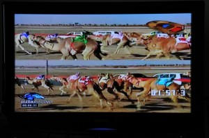 How to Bet: watch more racing, back less camels