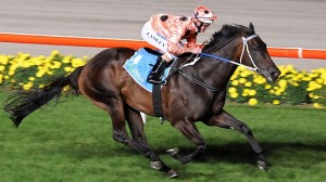 Black Caviar comes to town next month...