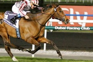 Cirrus Des Aigles could be top middle distance horse