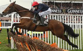 Bobs Worth - favourite to be Gold Cup jolly