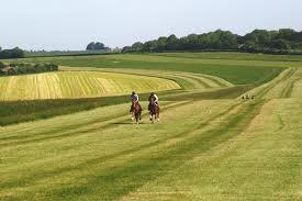 Whitsbury gallops