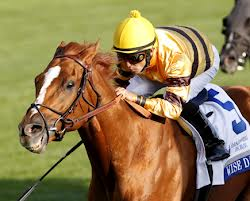 Wise Dan - favourite for repeat win