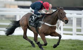 Bobs Worth - Gold Cup favourite