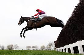 Sprinter Sacre - ready for Christmas