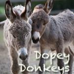 Dopey Donkeys