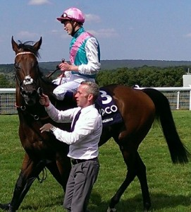 KIngman after his Sussex Stakes 'racecourse gallop'...
