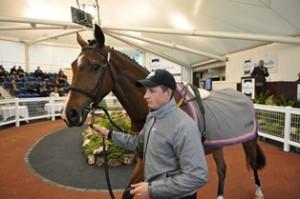 Brightwells Equine Sale