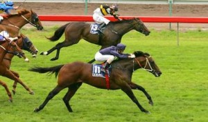 Fastnet Rock wins in Oz