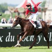 Classy Stallion Lope De Vega
