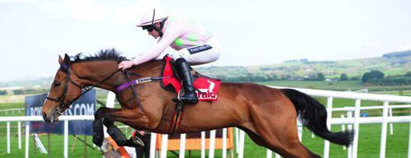 Faugheen: Winter Gold