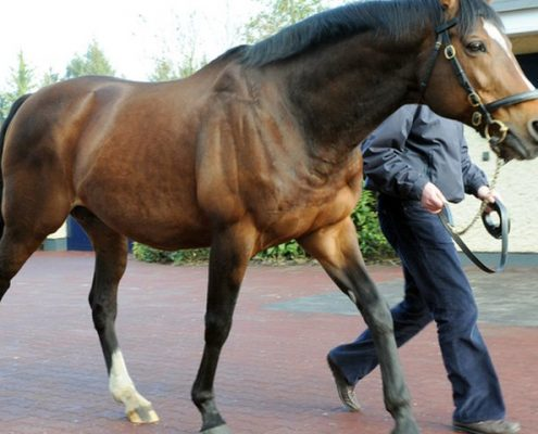 Galileo has fathered the next generation of stallions