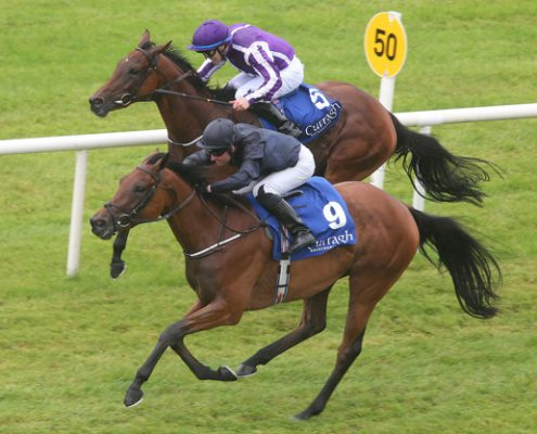 Rhododendron heads off Hydrangea at The Curragh on Sunday.