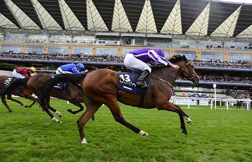 Aidan O'Brien will bid to break the G1 seasonal record on British Champions' Day at Ascot