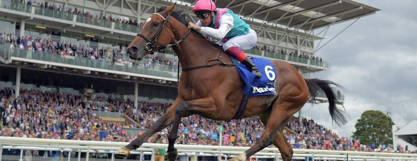 ENABLE bids for a fifth Group 1 win in a row in the Prix de l'Arc de Triomphe on Sunday. Image: RACINGFOTOS.COM