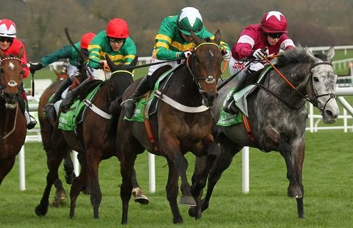 Prevew, Trends, Tips: Buveur D'Air bids for a Champion Hurdle double O: Mr John P. McManus T: Nicky Henderson J: Noel Fehily Photo Ian Headington / Racingfotos.com