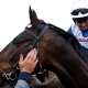 FRODON (Bryony Frost) after the Ryanair Chase Cheltenham 14 Mar 2019 - Pic Steven Cargill / Racingfotos.com