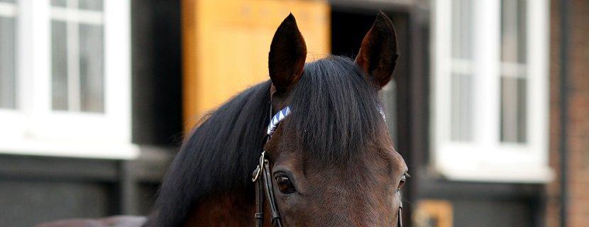 stallion DUBAWI at Dalham Hall Stud, Newmarket 31 Jan 2019 - Pic Steven Cargill / Racingfotos.com