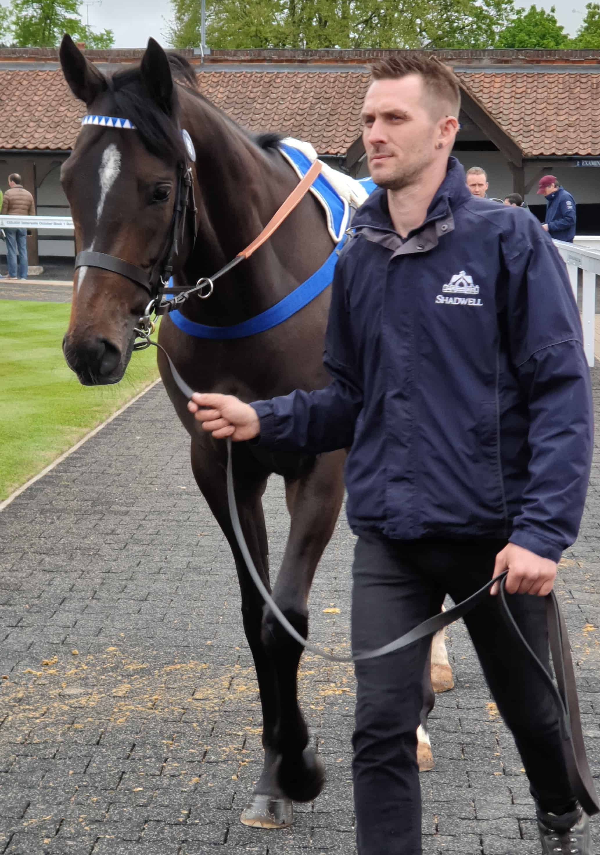 Elhafei is led around the paddock before going under the hammer, Newmarket, May 2019