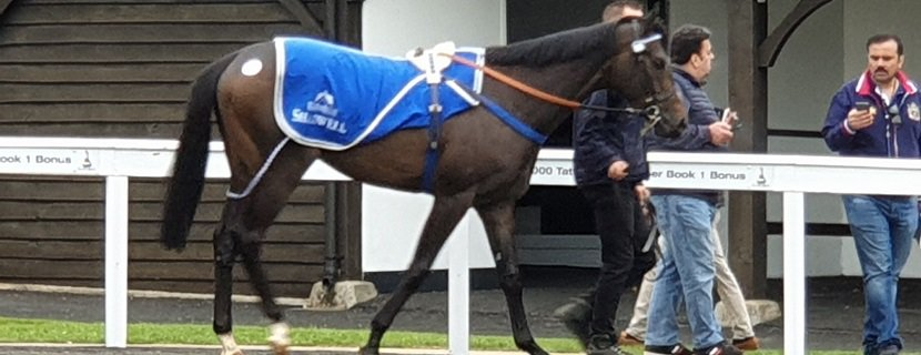 Elhafei parading at Tattersalls Newmarket Guineas HIT Sale, May 2019